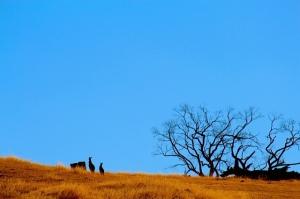 kangaroo-hill